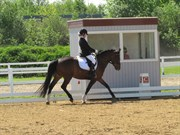 Hest til salg - TATJANA