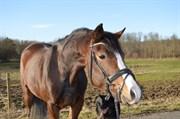 Hest til salg - PRIMADONNA