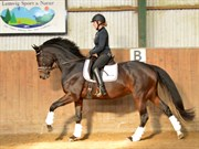 Hest til salg - UNICORN'S STYLISTA