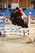 Hest til salg - SPEEDY ENDURO