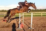Hest til salg - NY MOSEGÅRDS CATE