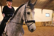Hest til salg - Eco SJ