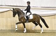 Hest til salg - 26 - NOBLE HIT