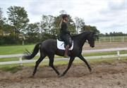 Hest til salg - NØRREMARKEN'S DIVA DIVINE