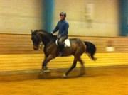 Hest til salg - gucci