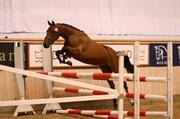 Hest til salg - KITTY HAWK RYNKEBY