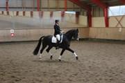 Hest til salg - TJØRNELUNDS LIT TLE DRUMMERBOY
