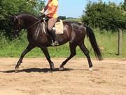 Hest til salg - AGATHE