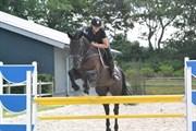 Hest til salg - SKOVLUNDS PABLO Z