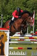 Hest til salg - Coeur de Loup