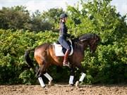 Hest til salg - ARMSTRONG