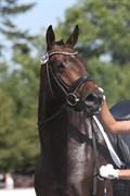 Hest til salg - WERONA