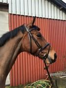Hest til salg - BUEGÅRDS CASSIOPEIA