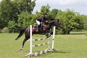 Hest til salg - NOTIZIA