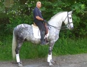 Hest til salg - Iracundo