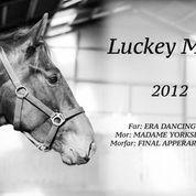 Hest til salg - LUCKEY ME E