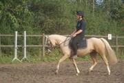 Hest til salg - WATERDIEKS DRONNING