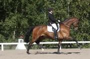 Hest til salg - ROMANO