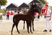 Hest til salg - LIPAS ROCK ME S