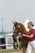 Hest til salg - VIDTSKUE'S FREJA