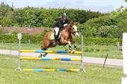 Hest til salg - JIMMIE