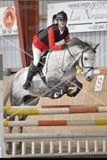 Hest til salg - SJAAK