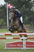 Hest til salg - ENGHØJS REBEL JOY