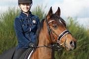 Hest til salg - SHEIK