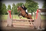 Hest til salg - ØRSTEDSLUNDS LUCKY LADY