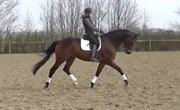 Hest til salg - HJØRNEGÅRDS MIKADO
