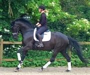 Hest til salg - Delta