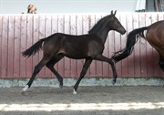 Hest til salg - GØRKLINTGÅRDS LADYBUG