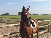 Hest til salg - RAISA M