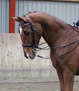 Hest til salg - HUGH-ROBBI VISION