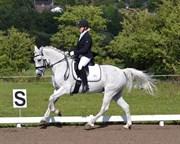 Hest til salg - HESSELHOLT'S CASANO
