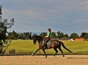 Hest til salg - SAMOS