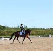 Hest til salg - PATURO STENLYKKE