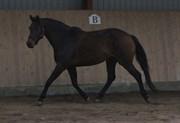 Hest til salg - CHANEL ÁG
