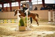Hest til salg - LAC LEMON LAKRIZ