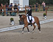 Hest til salg - Hedegårdens Bella Barcardi