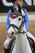 Hest til salg - SKYWALKER