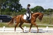 Hest til salg - LASAR IV