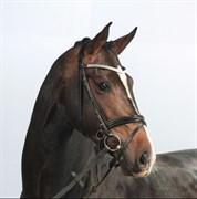 Hest til salg - CAPA´S DON MARCHELLO