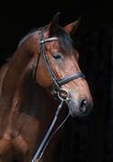 Hest til salg - RIGOLETTO EG