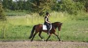 Hest til salg - MIYAMOTO MUSASHI