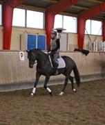 Hest til salg - Stald Chevals Duffy