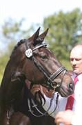 Hest til salg - LILLEVANGS FELIZIA