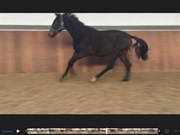 Hest til salg - STALD SKAARUPS ZAMALU