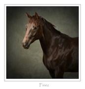 Hest til salg - FINEZ