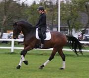 Hest til salg - MERCI